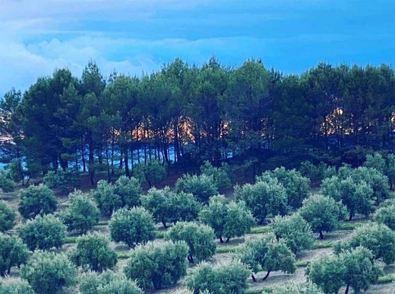 Conservación y desarrollo de variedades autóctonas: Matihuela