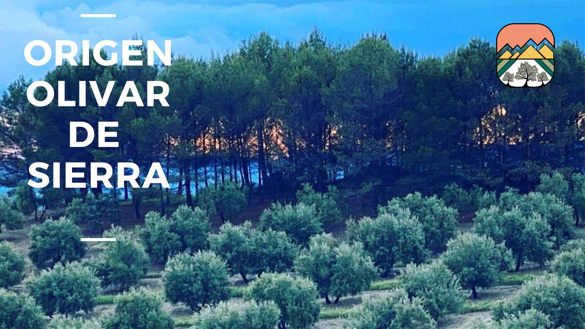 Extra virgin olive oil. Origin, olivar de sierra